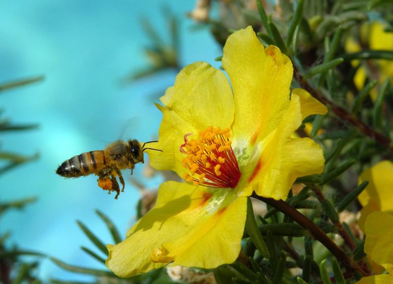 WExplain.ru - Как пчелы делают мед?