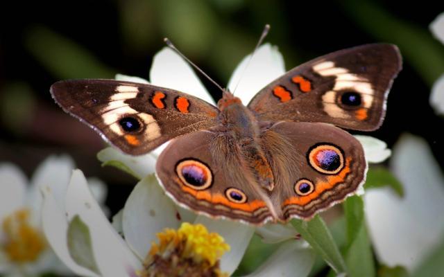 WExplain.ru - Почему у бабочек красивые крылья?