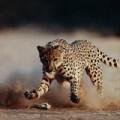 Кто из животных быстрее всех?