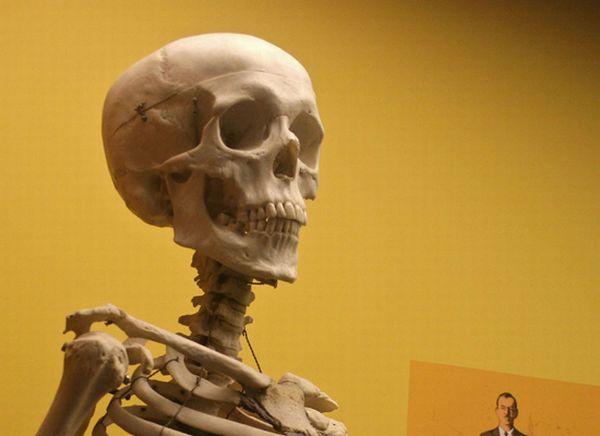 WExplain.ru - Сколько костей в теле человека?