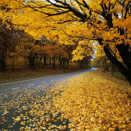 Почему с деревьев опадают листья?