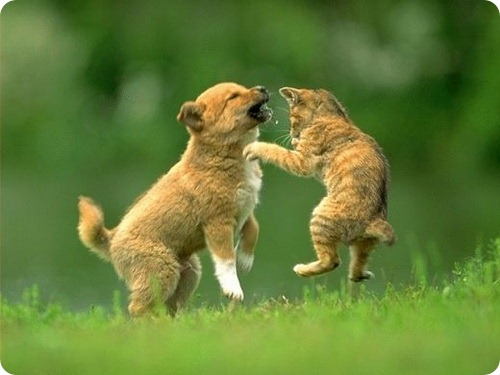 WExplain.ru - Почему собаки не любят кошек?