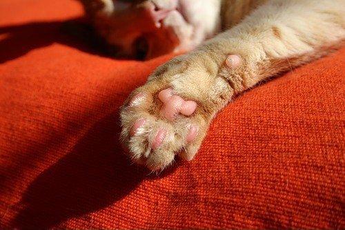 WExplain.ru - Почему кошки иногда мнут лапками?