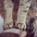 Почему кошки иногда мнут лапками?