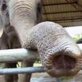 Зачем слону нужен хобот?
