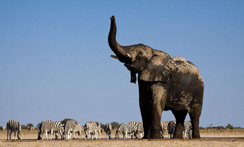 WExplain.ru - Зачем слону нужен хобот?