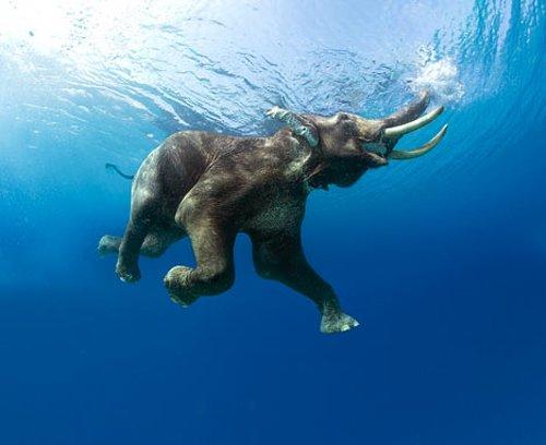WExplain.ru - Интересные факты о слонах