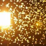 Почему мотыльки летят на свет?