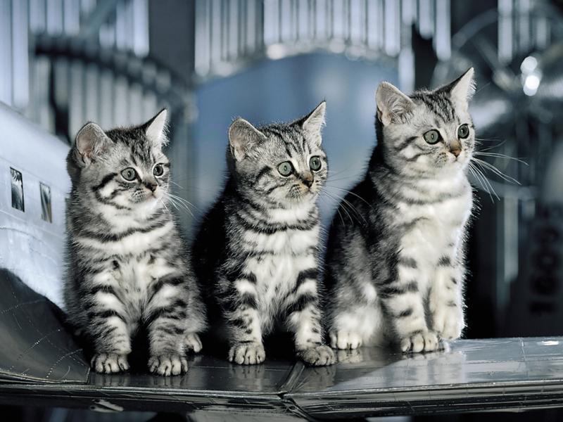 WExplain.ru - Интересные факты о кошках