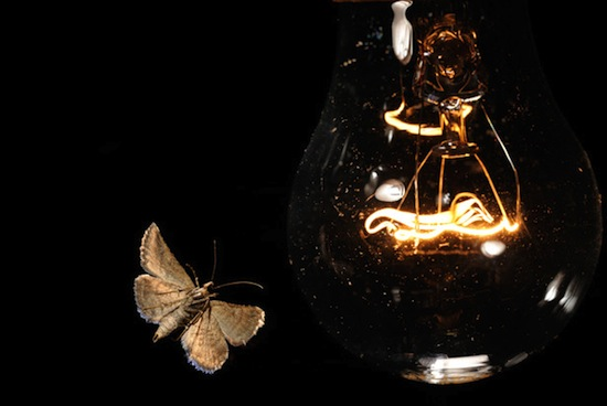 WExplain.ru - Почему мотыльки летят на свет?