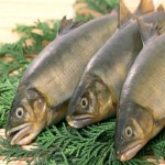 Почему четверг называют «рыбным» днем?