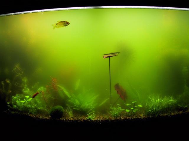 WExplain.ru - Почему мутнеет вода в аквариуме?