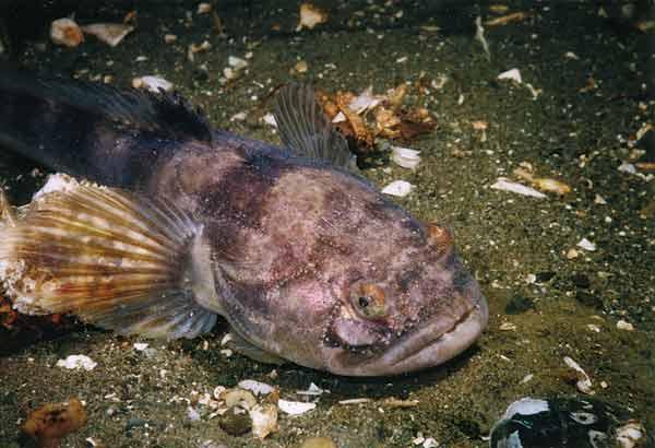 WExplain.ru - Как спят рыбы?