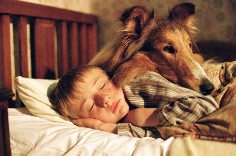 "WExplain.ru - Почему ""Собака - друг человека""?"