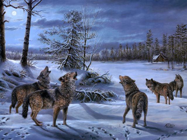 WExplain.ru - Почему волки воют на луну?