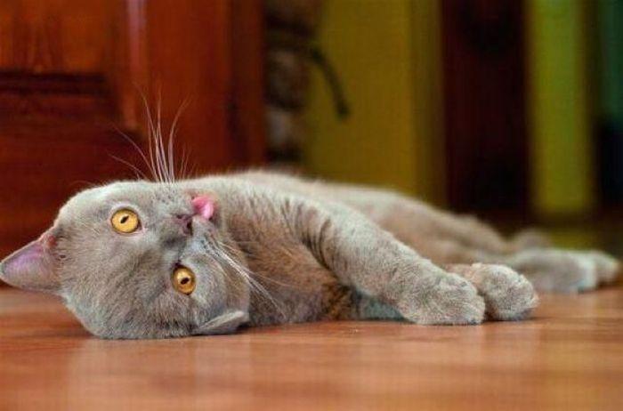 WExplain.ru - Почему коты и кошки любят валерьянку?