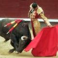 Почему быки не любят красный цвет?