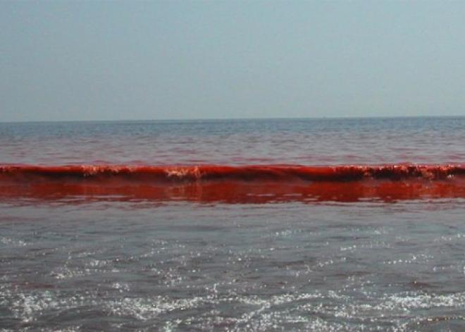 WExplain.ru - Почему море иногда цветет?