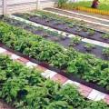 Как сделать свой огород полезным и красивым?