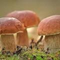 Как вырастают грибы?