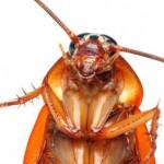 Удивительные факты о тараканах