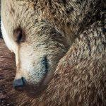 Почему медведь зимой спит?