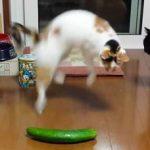 Почему коты боятся огурцов?
